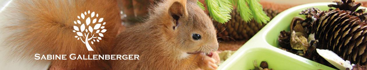 Eichhörnchen Infos – Sabine Gallenberger